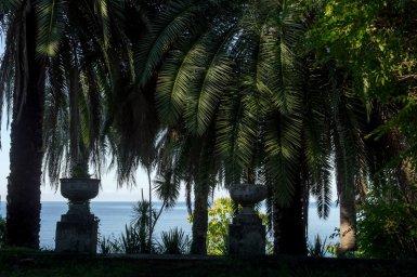 Пальмы у самой воды