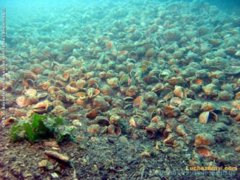 Глубины Черного моря Абхазии