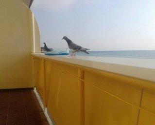 Абхазские голуби